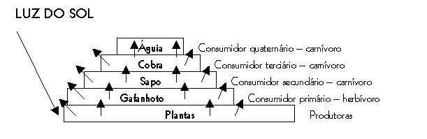 É interessante observar que o número de indivíduos de cada população  diminui a medida que a espécie se distancia da base da pirâmide alimentar 7b9d851f17516